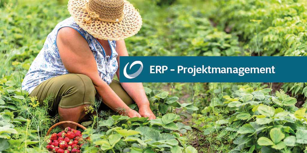 ERP-Projektmanagement: 3 Fragen an FRUITMASTERS