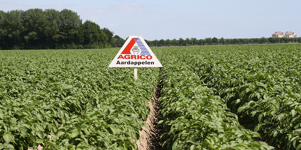 Agrico en Cegeka: voor een innovatieve en toekomstbestendige AGF-sector